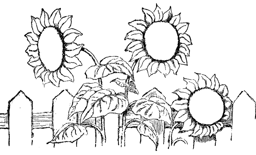 900x546 Sunflower Coloring Page Lovely Free Printable Sunflower Coloring