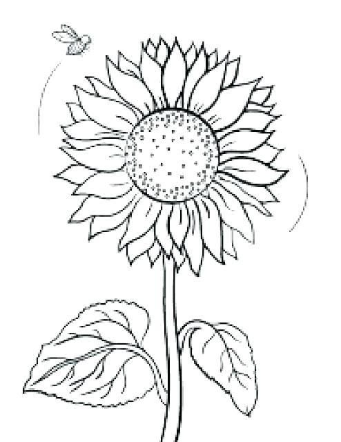 494x640 Sunflower Printable Coloring Pages Sunflower Coloring Page