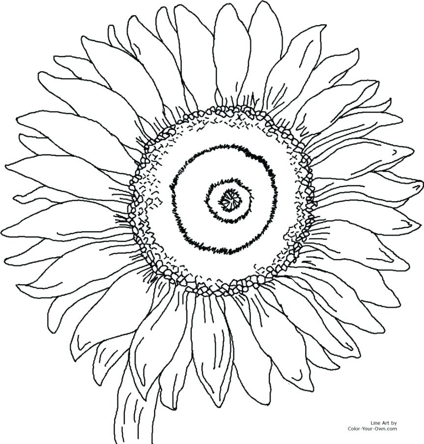 863x903 Sunny The Sunflower Coloring Page Free Printable Summer Pages