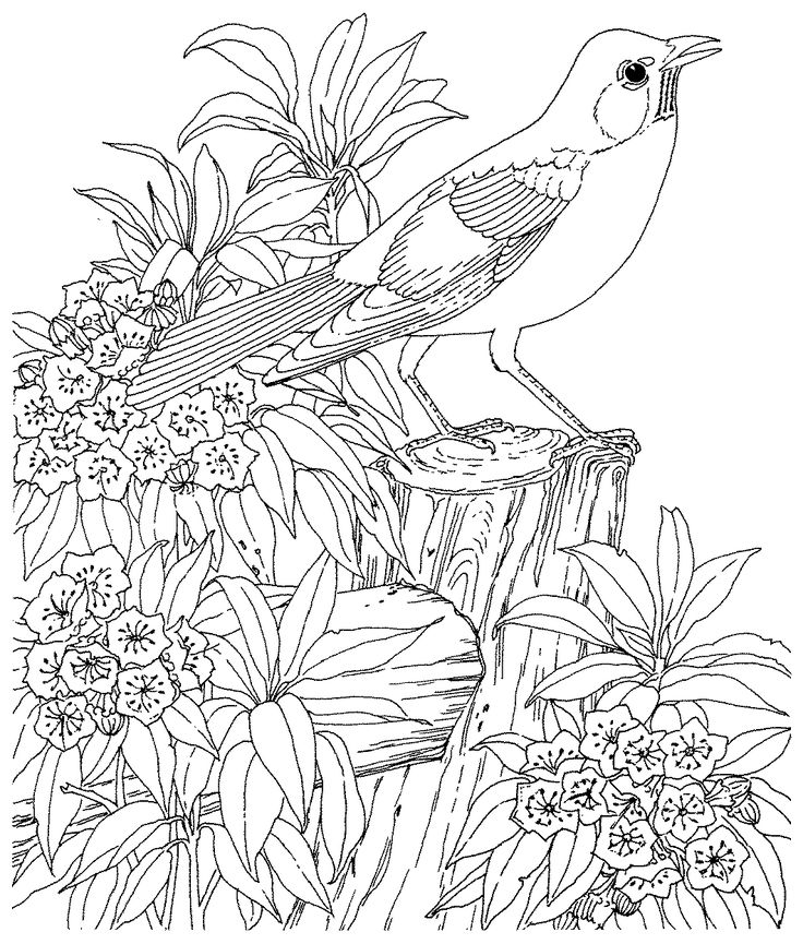736x865 Best Col B Animaux Images On Coloring Books, Free