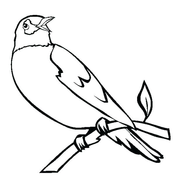 600x612 Coloring Page Bird Robin Bird Coloring Pages Birds Robin Bird