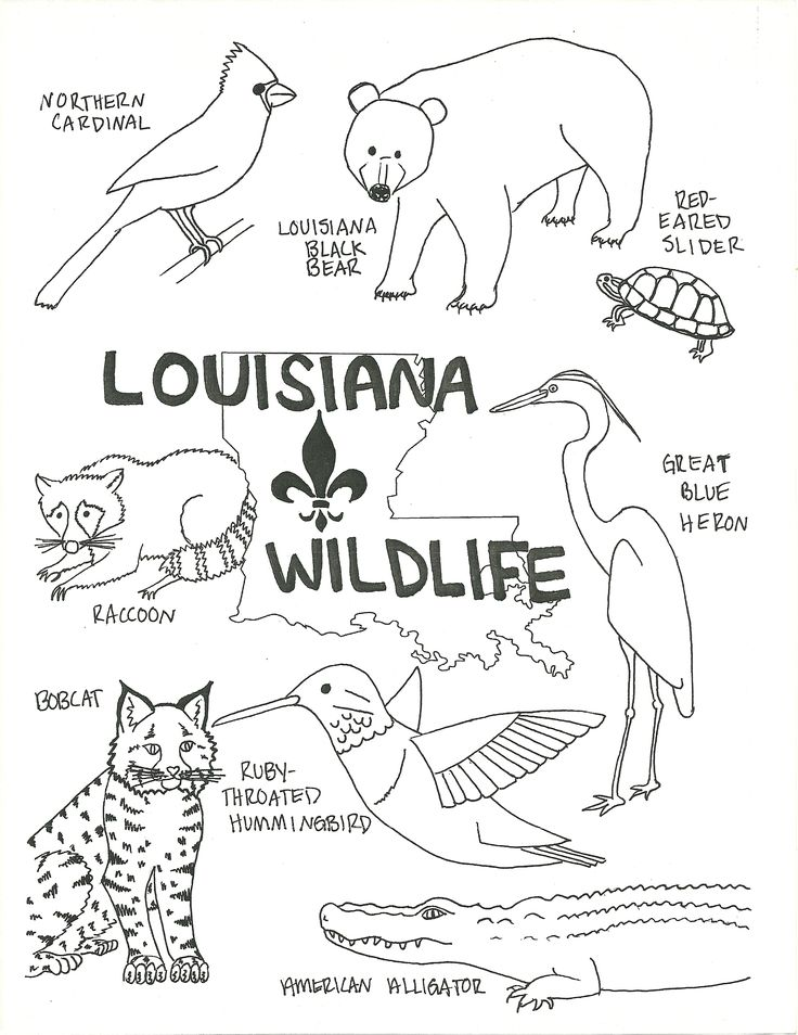 Swamp Animals Coloring Pages