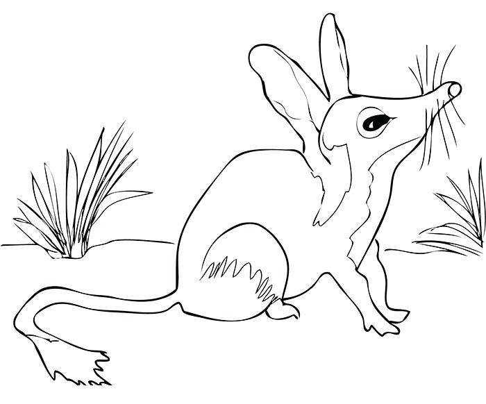 700x582 Australian Animals Coloring Pages Free Printable Coloring Pages