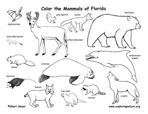 480x370 Free Coloring Pages Of Swamp Habitat Apraxia, Spd, Dyspraxia