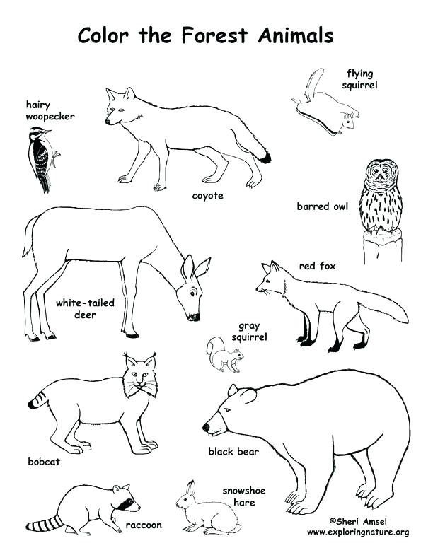 612x792 Ocean Habitat Coloring Pages Animals And Their Habitats Coloring
