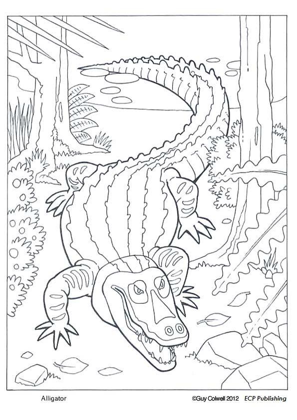 595x842 Coloring Book Fish Sea Life
