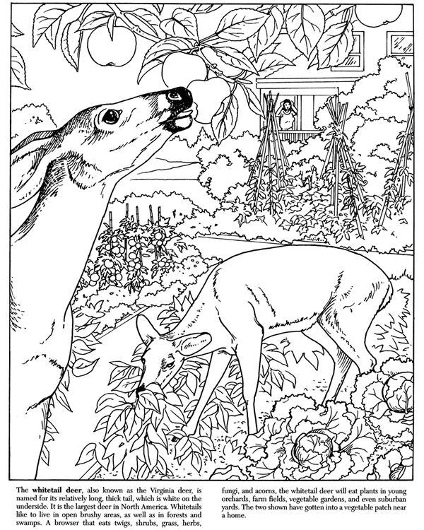 600x750 Printable Dover Coloring Pages Home Coloring Page Coloring