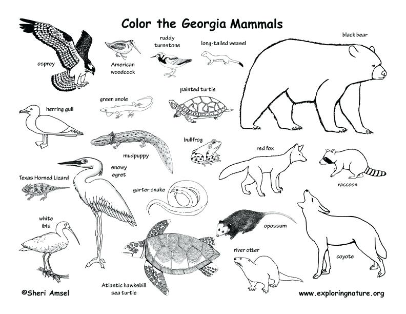 792x612 Animal Habitat Coloring Pages Free Animal Habitats Coloring Pages