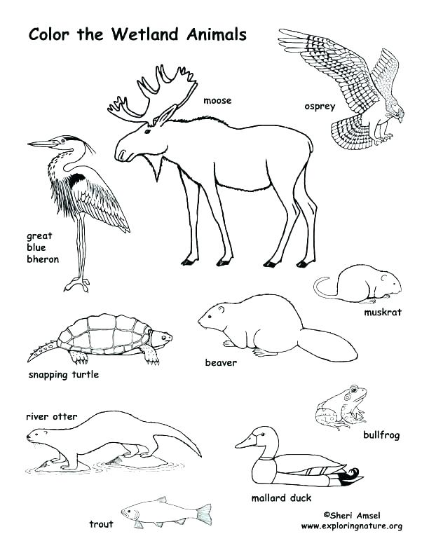 612x792 Animal Habitat Coloring Pages Best Of Of Swamp Animals Coloring
