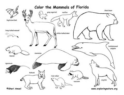 480x370 Swamp Animals Coloring Pages