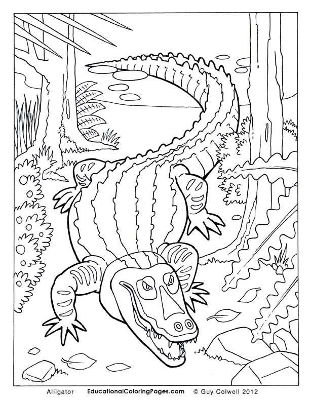 612x792 Top Alligator Coloring Pages