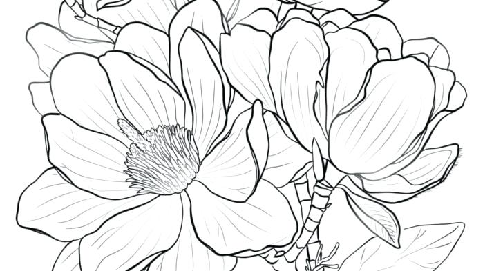 728x393 Coloring Outstanding Coloring Pages Purchase Picture Outstanding