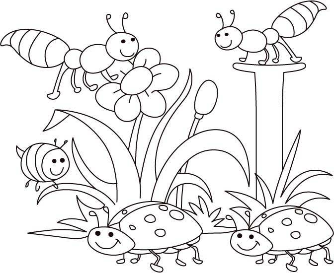672x550 Bug Coloring Pages For Kids