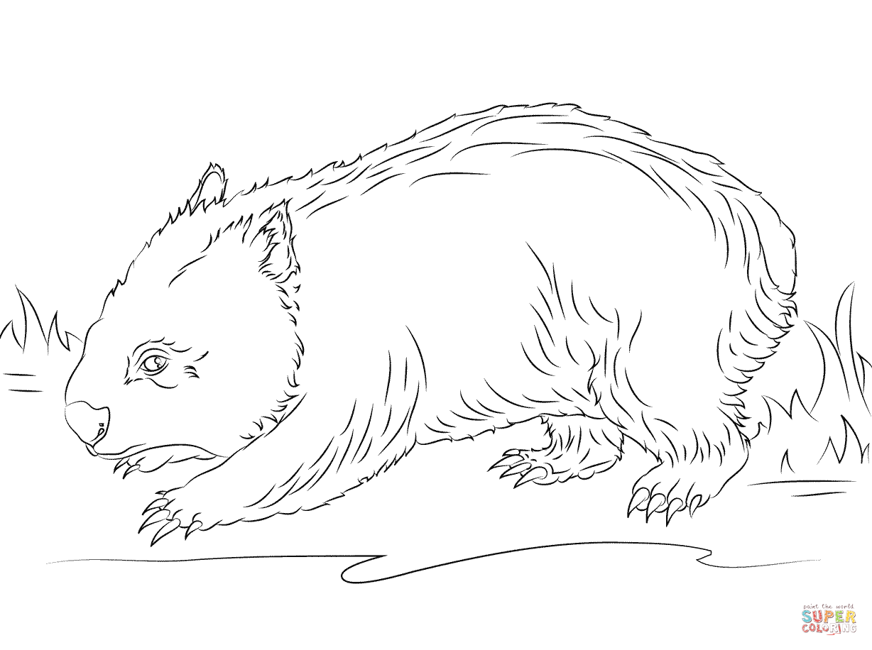 1228x916 Weird Preposition Coloring Pages Cute Wombat P