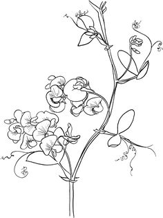 236x315 Image Result For Sweet Pea Embroidery Embroidery