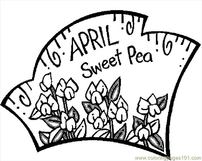 650x520 Coloring Pages April Sweet Pea Natural World Flowers Free Bebo