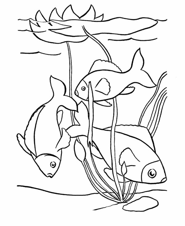 600x734 Pond Fish Coloring Pages