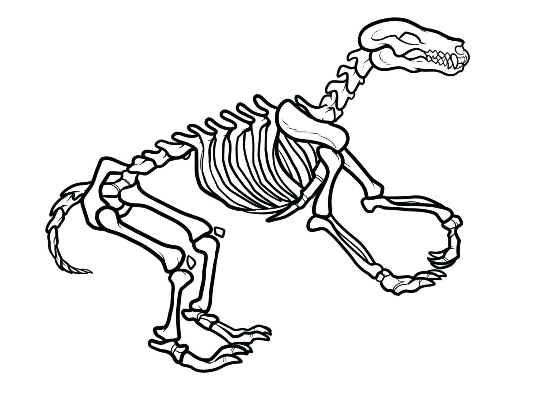1792x1323 Edge Dinosaur Skeleton Coloring Page T Rex Pag