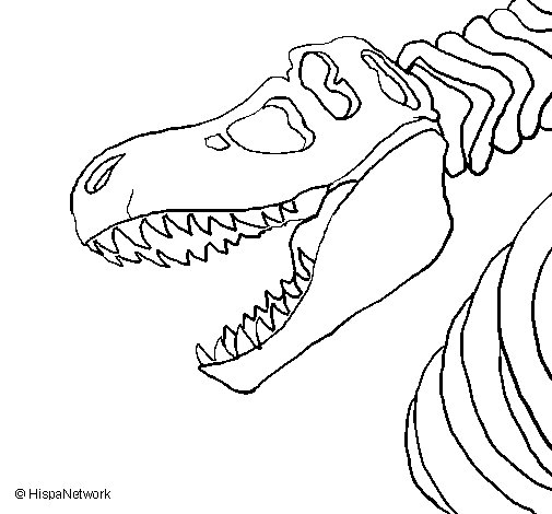 505x470 T Rex Skeleton Coloring Page