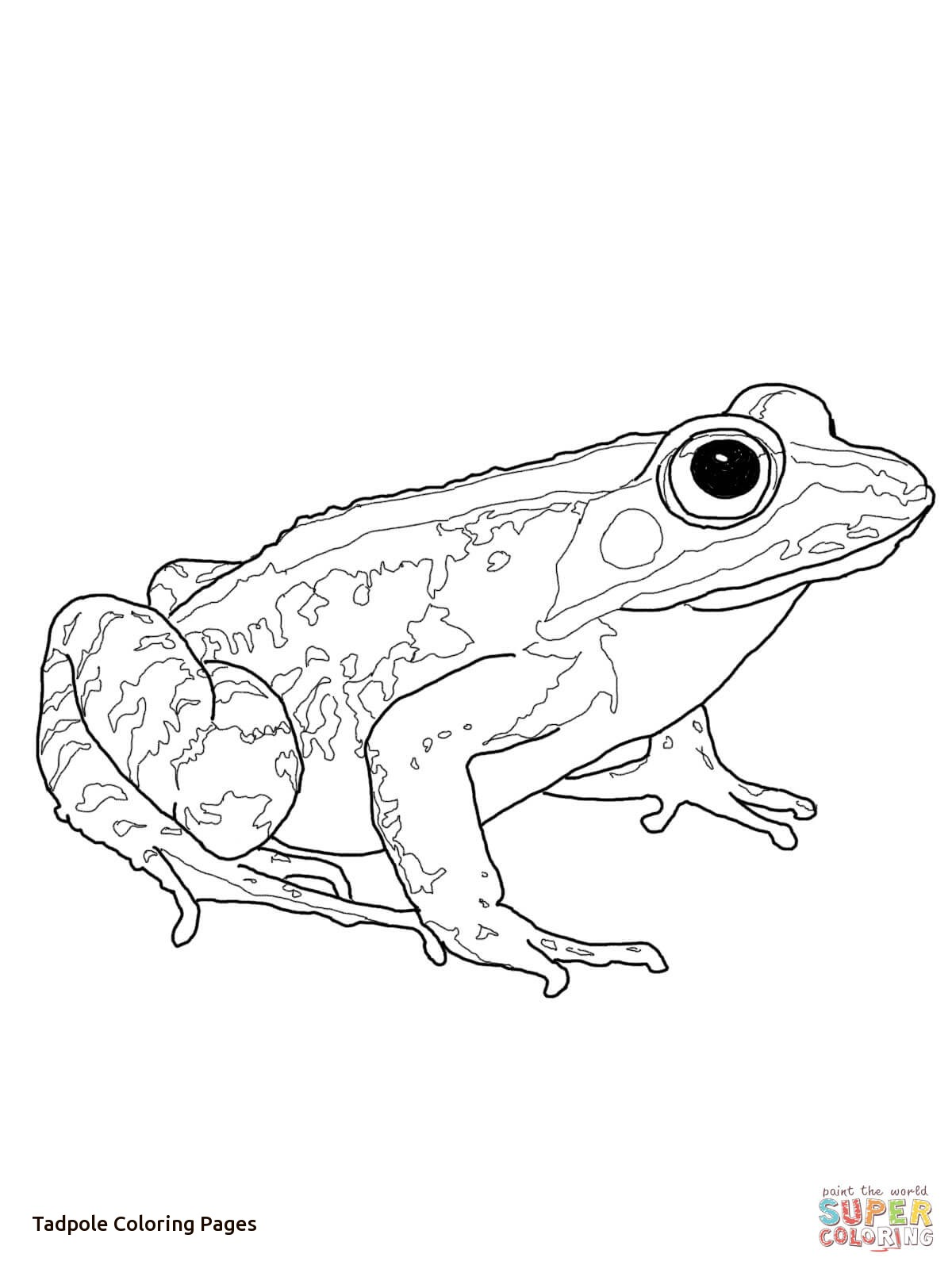 The Best Free Tadpole Coloring Page Images Download From 61 Free