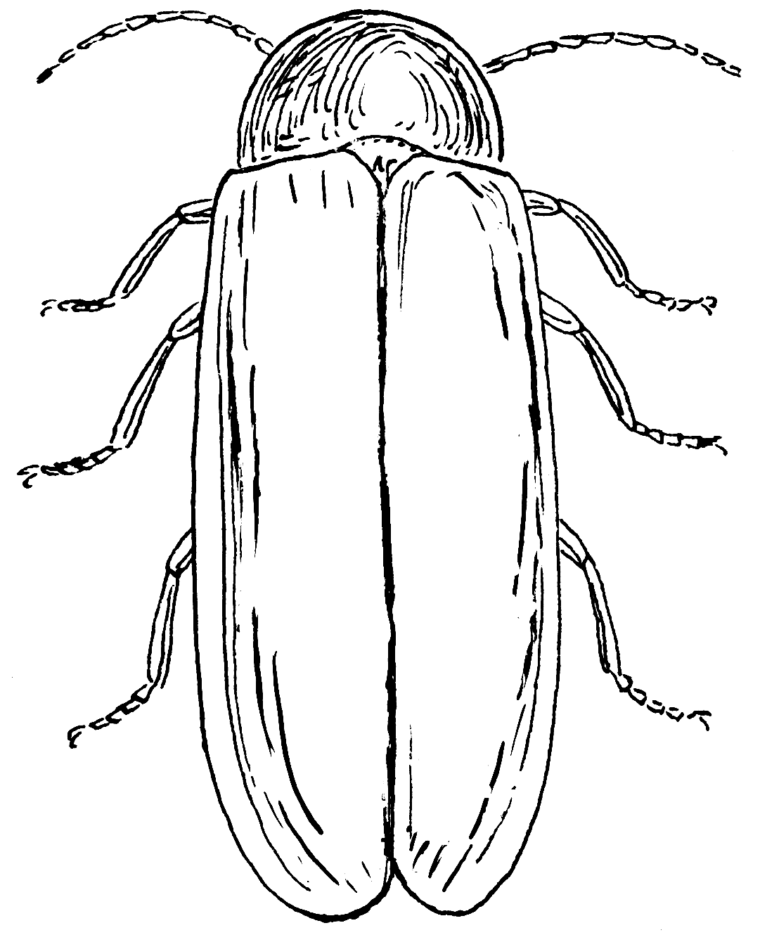 1081x1340 Fine Lightning Bug Coloring Pages Component