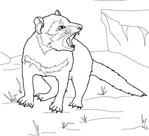 480x439 Tasmanian Devil Coloring Pictures Click To See Printable Version