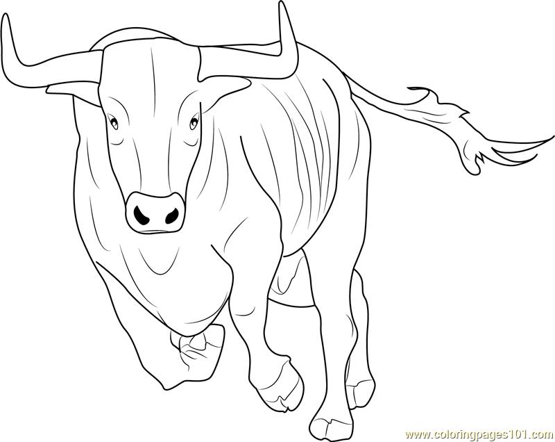 800x636 Bos Taurus Coloring Page