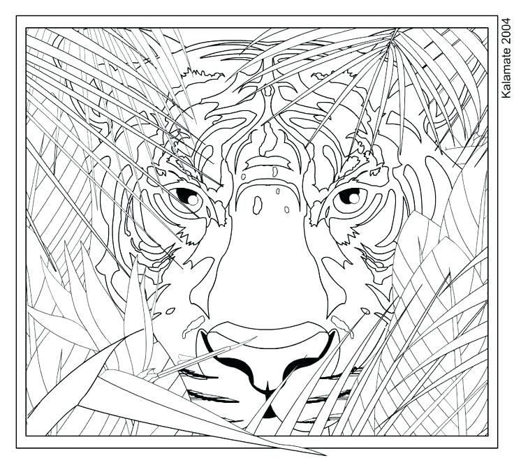 736x666 Tiger Coloring Teamwork Coloring Pages Tiger Coloring For Adults