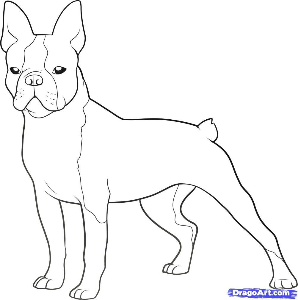1002x1008 Boston Terrier Coloring Pages Printable Page At Boston Terrier