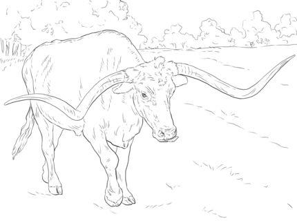 430x323 Texas Longhorn Coloring Sheet