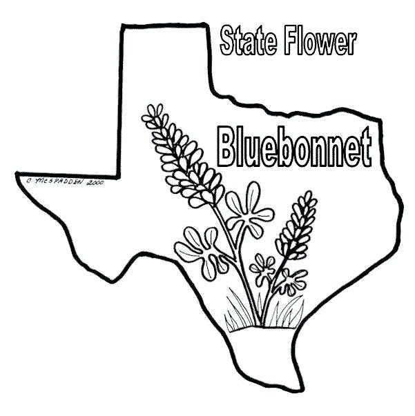 FREE Printable Texas State Flag & color book pages | 8½ x 11 | 603x601