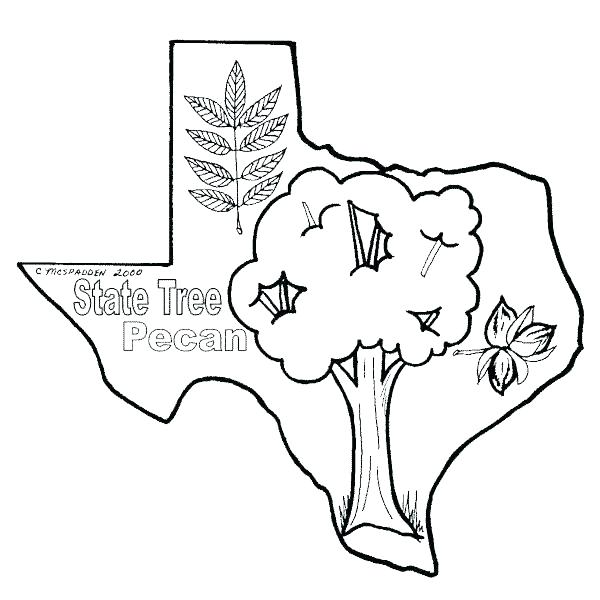 600x600 Texas Flag Coloring Page Icontent