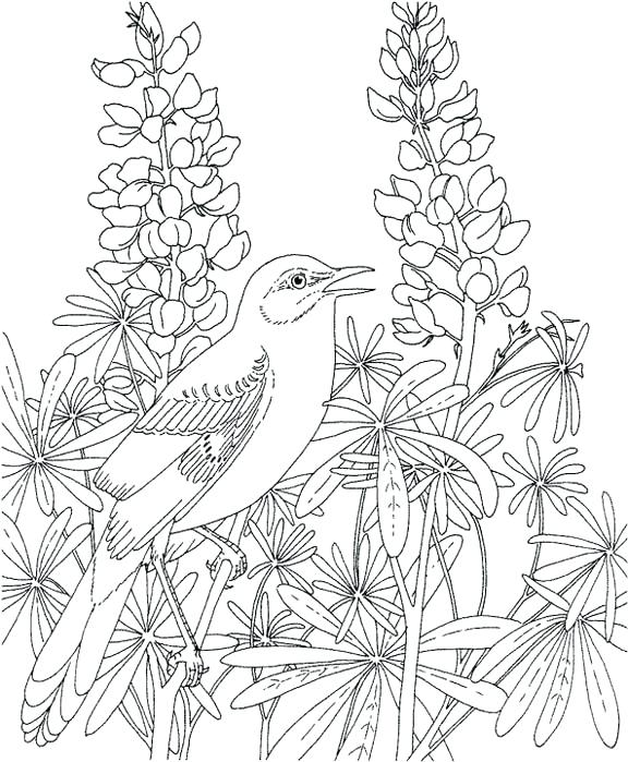576x699 Texas Coloring Page Mockingbird Coloring Page Purple Kitty Texas