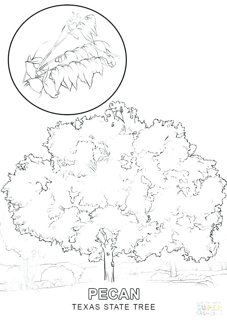 725x1024 Texas Coloring Pages Symbols Coloring Pages Coloring Sheet