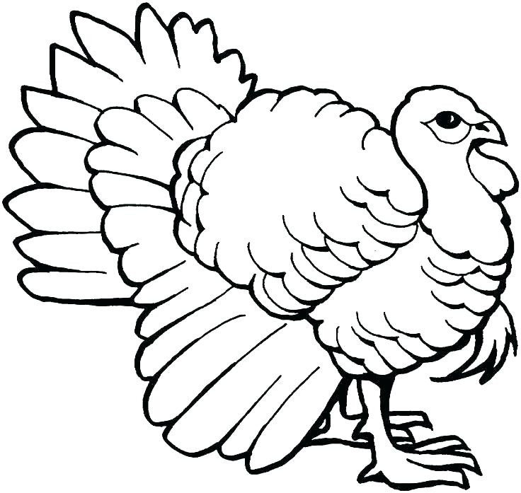 736x697 Thanksgiving Turkey Coloring Page Coloring Page Of Turkey Coloring