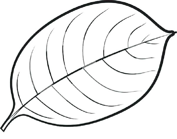 600x470 Leaf Coloring Pages Thanksgiving Leaves Coloring Pages Coloring
