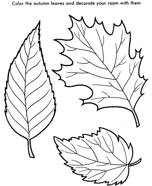 600x734 Selected Pictures Of Fall Leaves To Color Autumn Coloring Pages