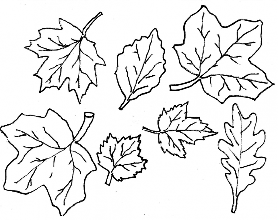 940x745 Autumn Leaves Coloring Pages Fall Season Nature Printable
