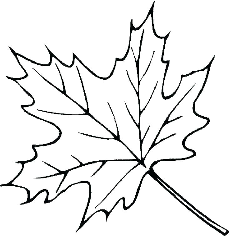 736x755 Coloring Pages Leaves Printable Leaves Coloring Pages Leaves