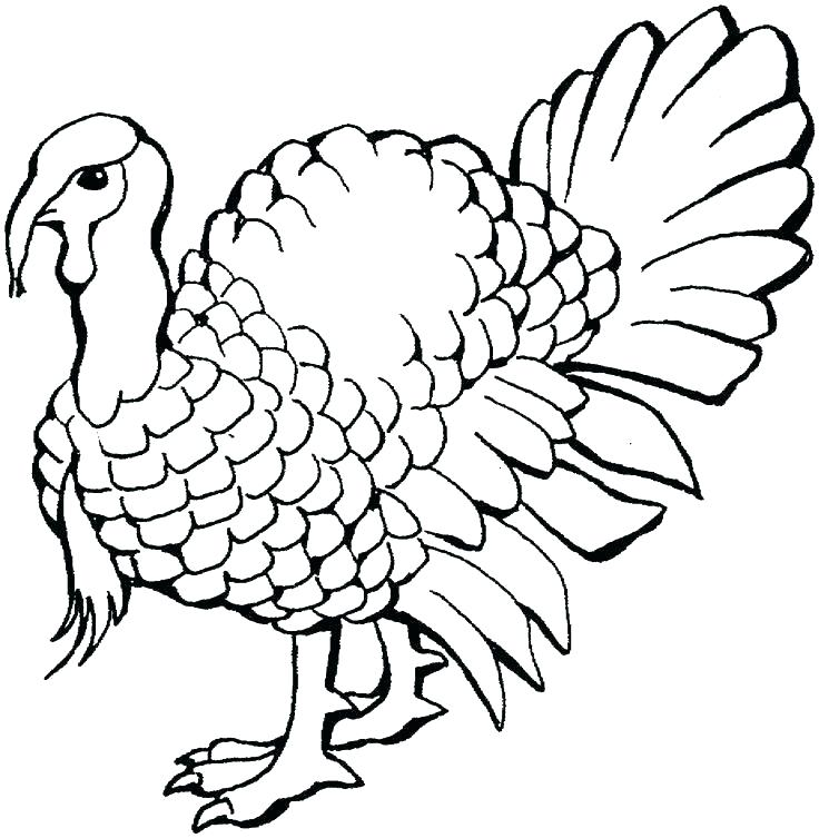 736x753 Turkey Coloring Pages For Kids Free Printable Thanksgiving