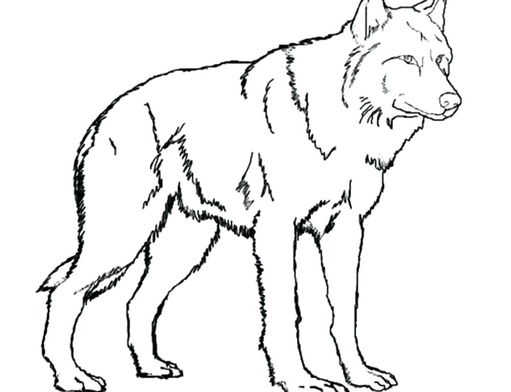 1000x768 Anime Wolf Coloring Pages Coloring Pages Of Anime Wolves Many