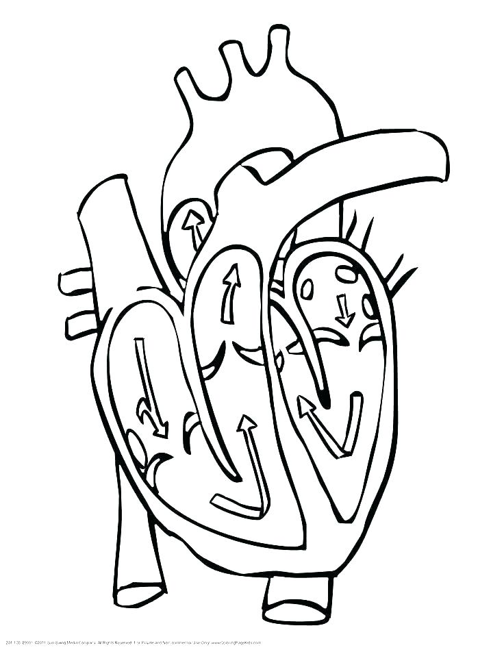 736x952 Heart Anatomy Coloring Pages Coloring Page Of A Heart Abstract