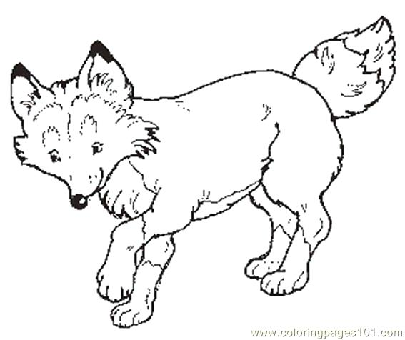 567x476 The Mitten Coloring Pages