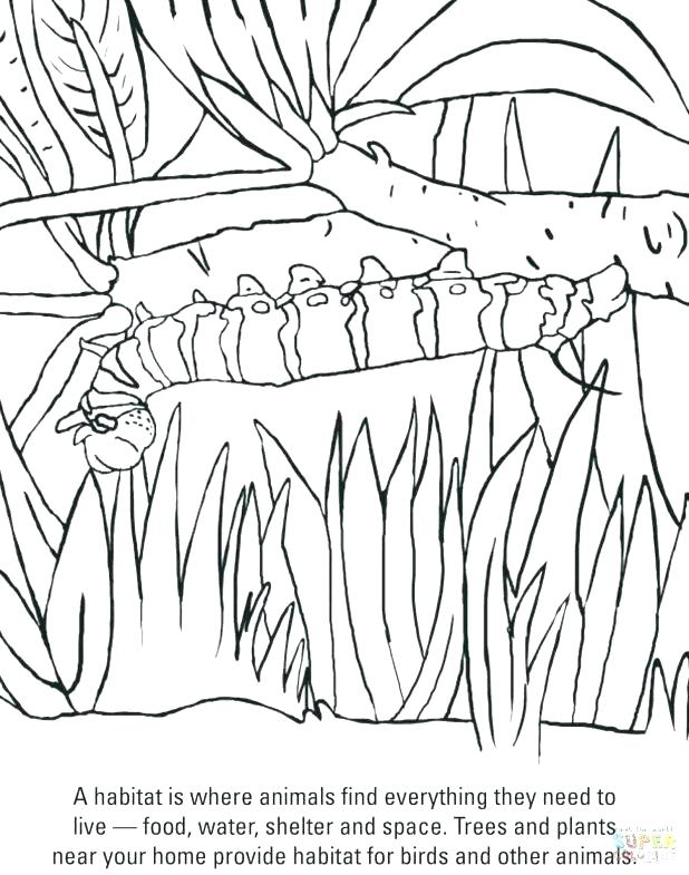 618x785 Hungry Caterpillar Coloring Pages Hungry Caterpillar Coloring