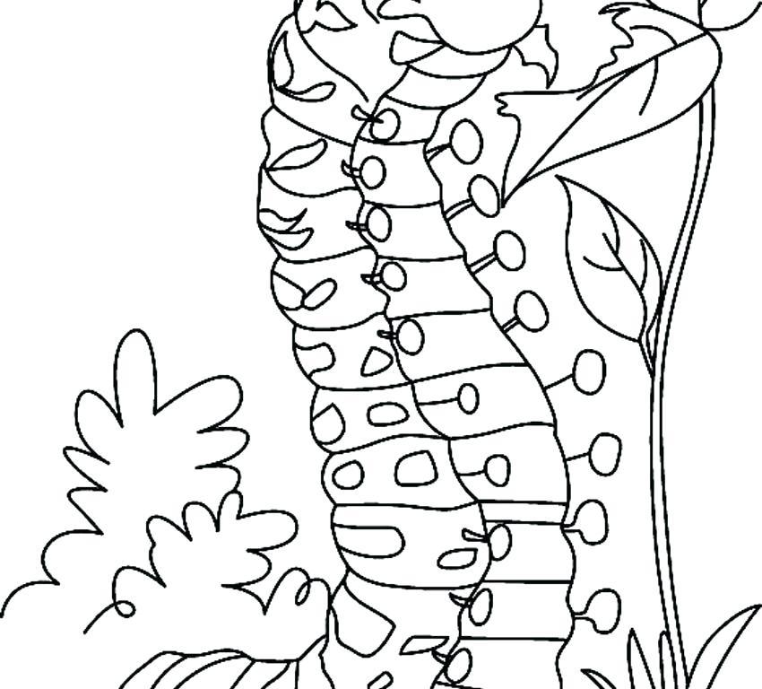 850x768 Caterpillar Coloring Hungry Caterpillar Coloring Page Caterpillar