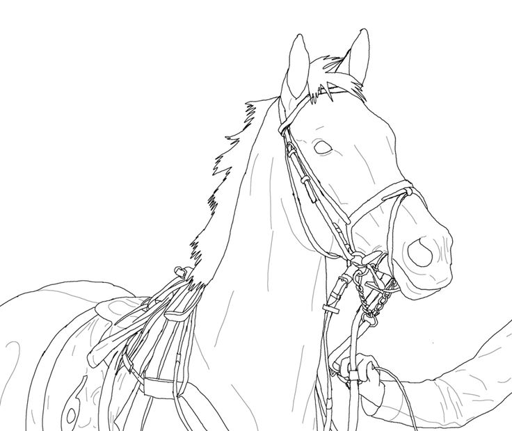 Thoroughbred Coloring Pages