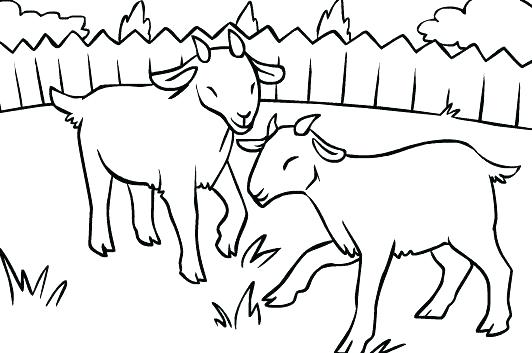 532x353 Three Billy Goats Gruff Coloring Pages Kids Coloring Page Goats