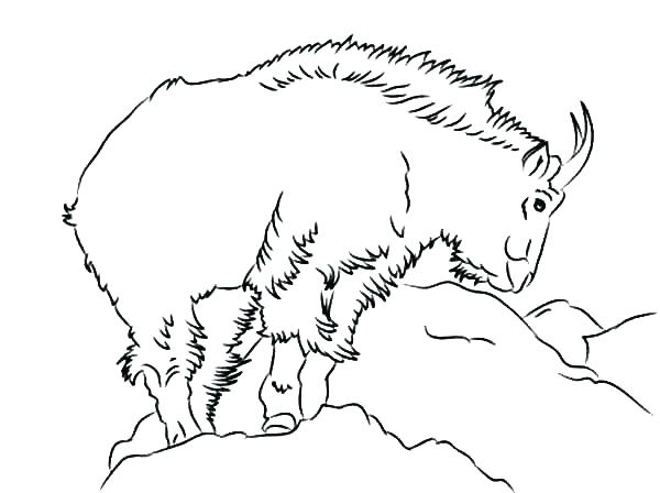600x448 Billy Goats Gruff Coloring Page Three Pages Goat