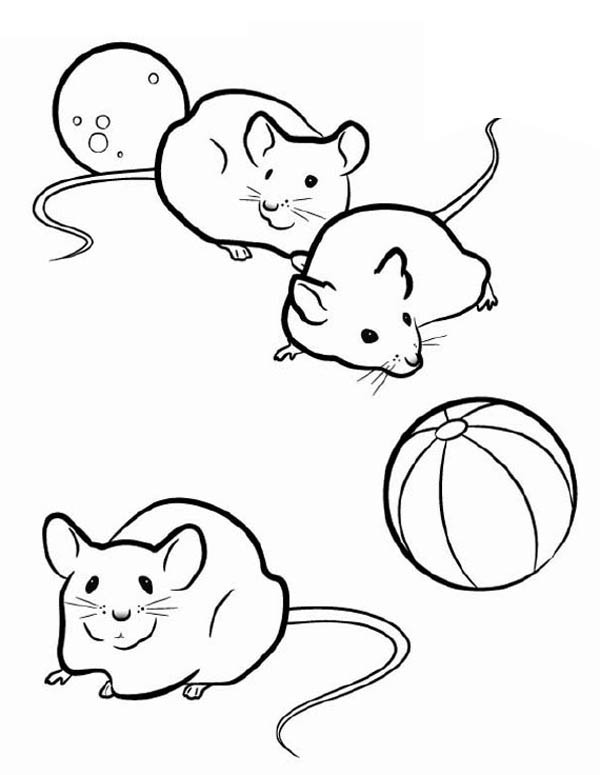 600x775 Three Mice In Guinea Pig Coloring Page Color Luna