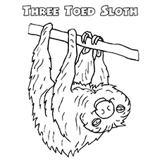 230x230 Top Sloth Coloring Pages For Your Toddler